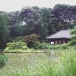 浄瑠璃寺2